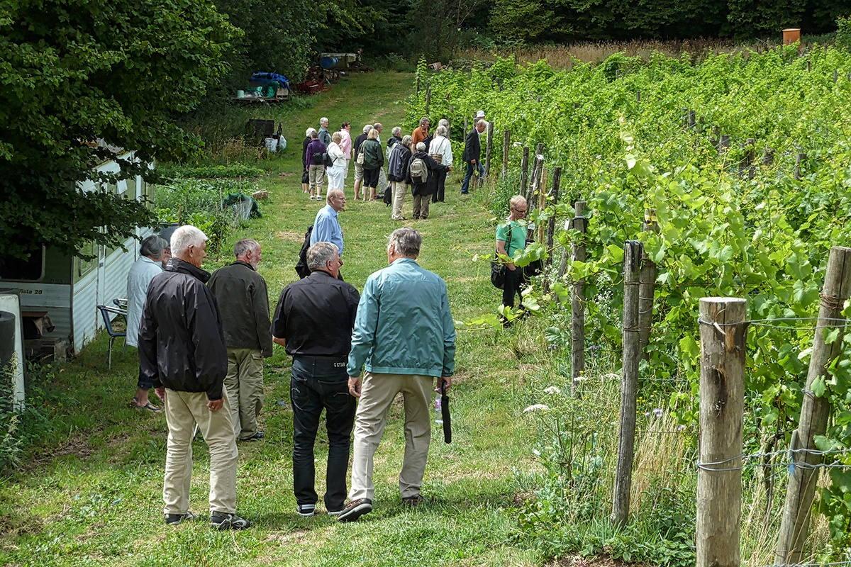 Sedlescombe Organic Vineyard 2010. Foto © Ole Stauning.