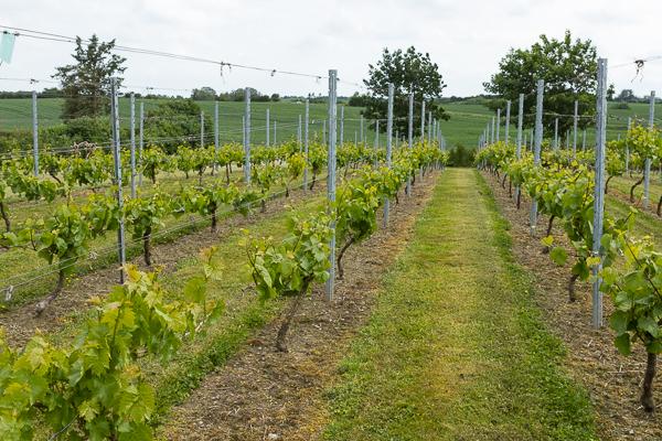 Begynderkursus i Vinavl, Modul 3a, Pasning af vingården