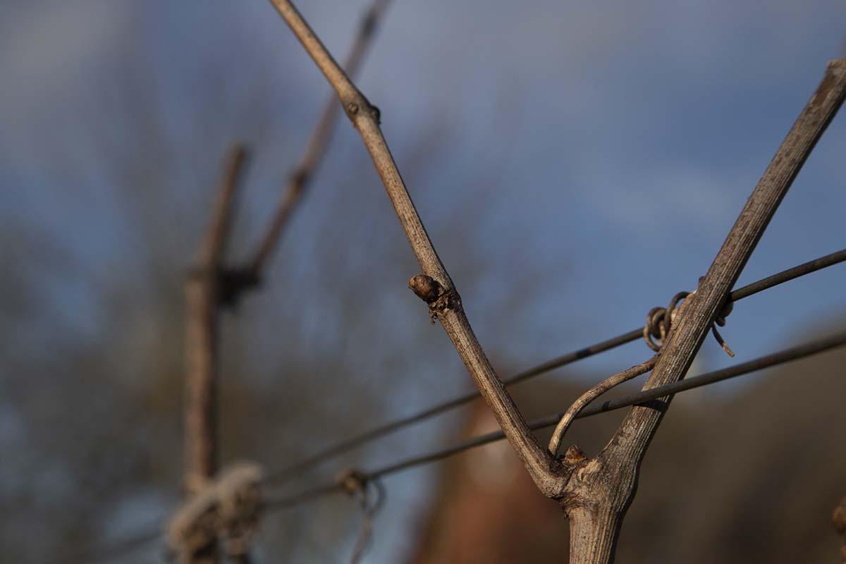 Lagring På Egetræsfade